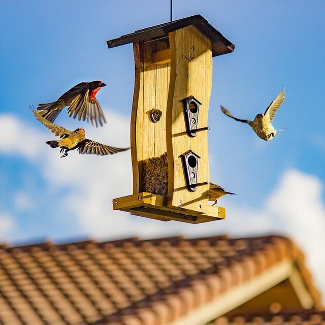 Architecture, Bird House, Birdhouse, Birds, Roof