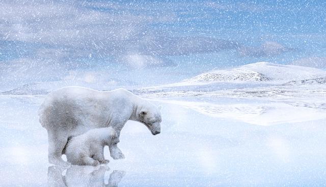 Polar Bears, Polar Bear Cub, Predator, Arctic, Cold