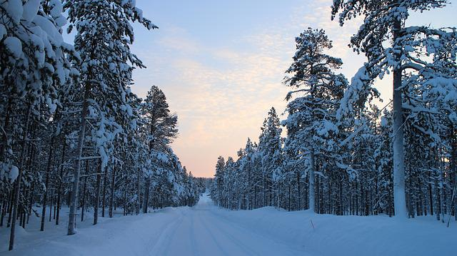Snowy Road, Winter, Forest Road, Cold, Arctic, Frost