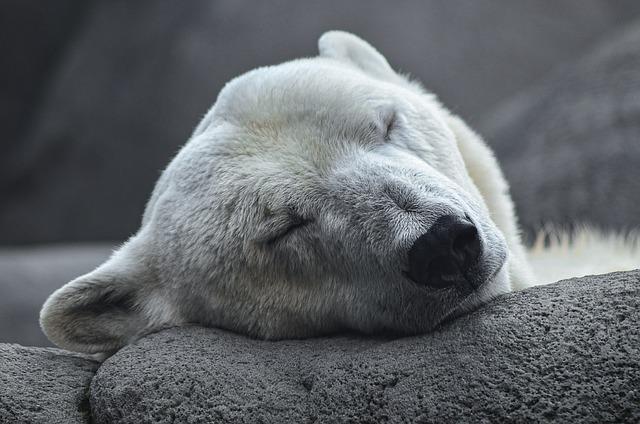 Polar Bear, Arctic, Predator, Young Animal, Zoo, Bear