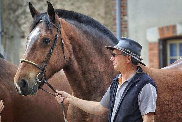 Horse, A Workhorse, Ardennes, Cart Horse, Fair
