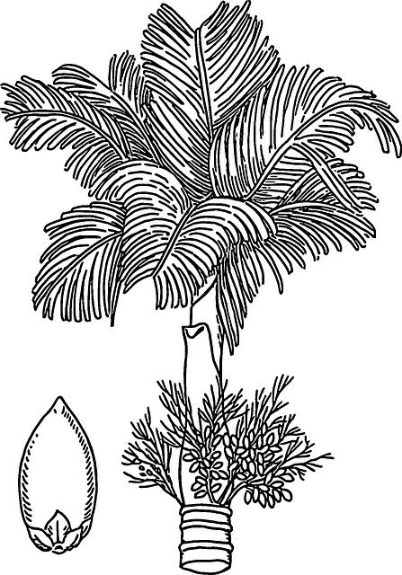 Betelnut, Areca, Nut, Tree, Flowers, Areca Palm