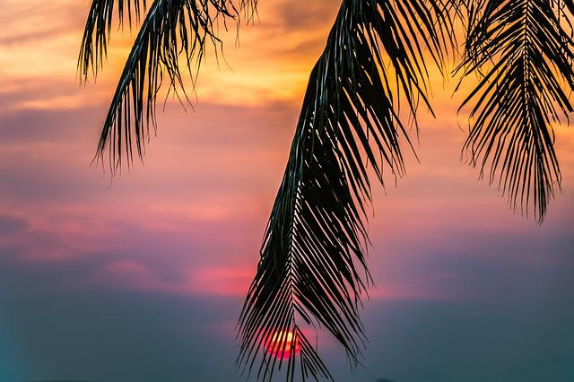 Sunset, Beach, The Tropical, The Coast, Arecaceae, Sky