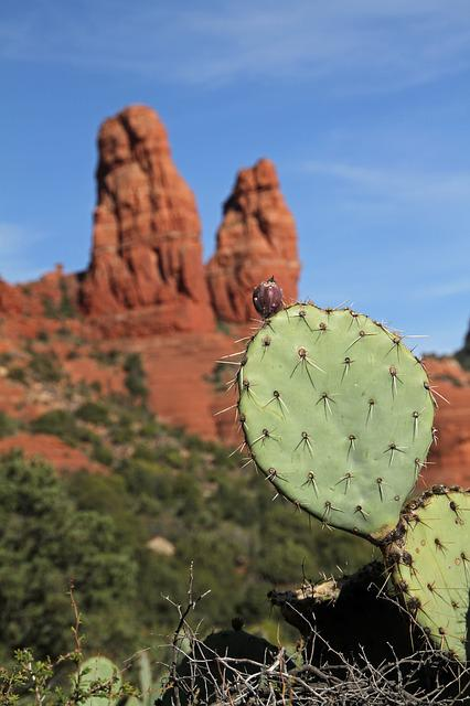 Cactus, Sedona, Arizona, Red Rocks, Buttes, Desert, Usa