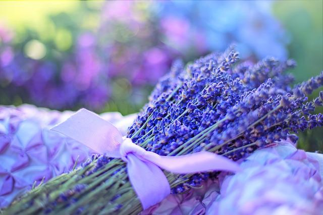 Lavender, Fresh, Flowers, Herbal, Natural, Aroma