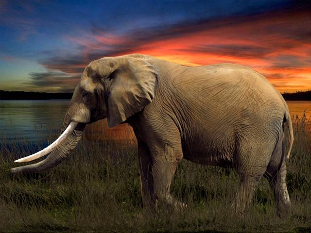 Elephant, Savannah, Arrangement