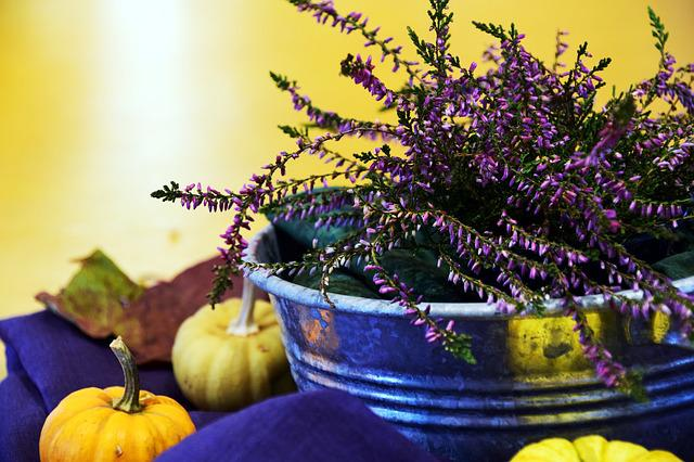 Erika, Arrangement, Autumn, Decoration, Flowers