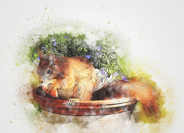Squirrel, Animal, Eating Apple, Art, Abstract