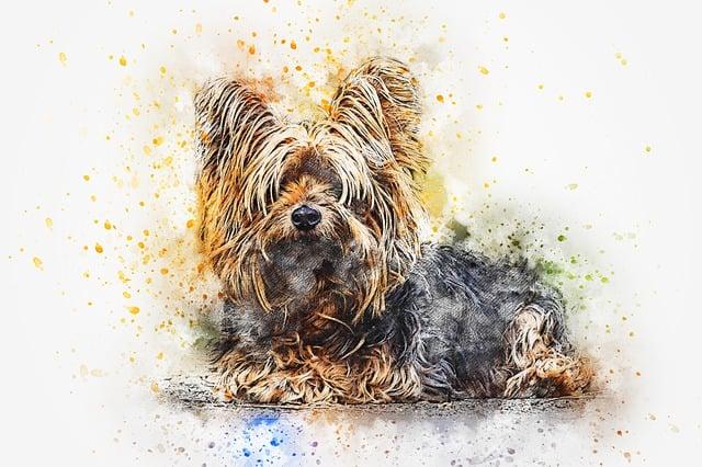 Dog, Animal, Terrier, Art, Watercolor