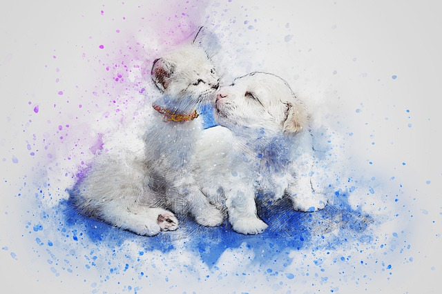 Cat, Dog, Cute, Art, Abstract, Watercolor, Vintage