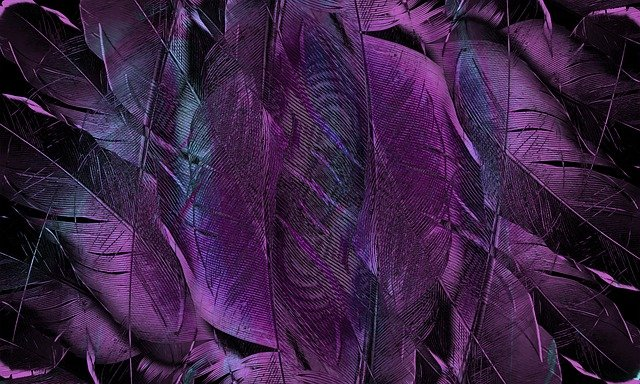 Feather, Pattern, Texture, Form, Structure, Art