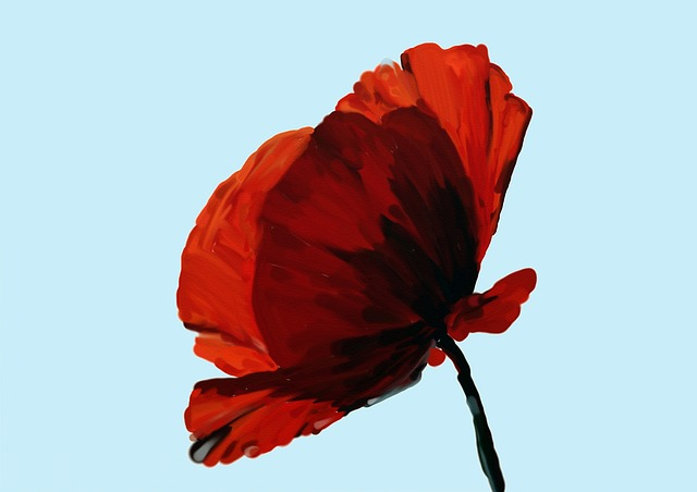 Poppy, Watercolour, Nature, Art, Paint, Image