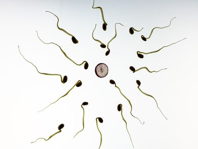 Sperm, Fertilization, Pregnancy, Development, Live, Art