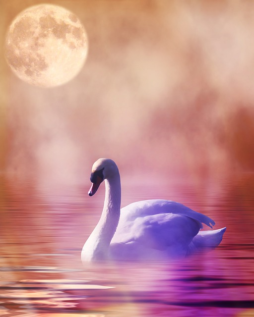 Swan, Romantic, Digital Art, Art, Premade Background