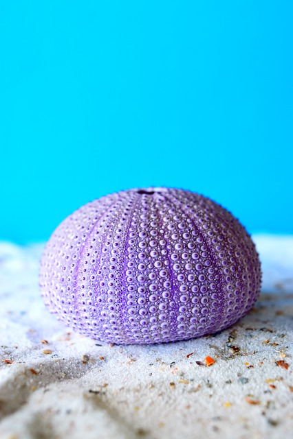 Sea Urchins, Sea, Sand, Art