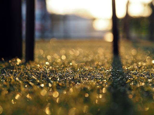 Artificial Grass, Background, Backlit, Surface, Relax