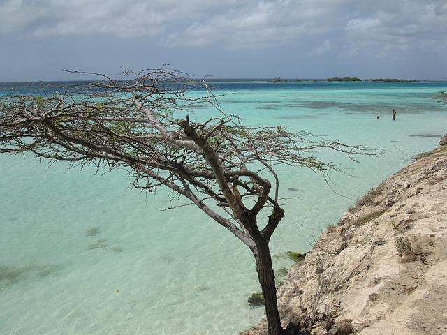 Aruba, Tree, Beach, Scenic