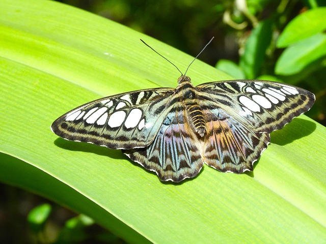 Butterfly, Nature, Wildlife, Aruba, Tropical, Caribbean
