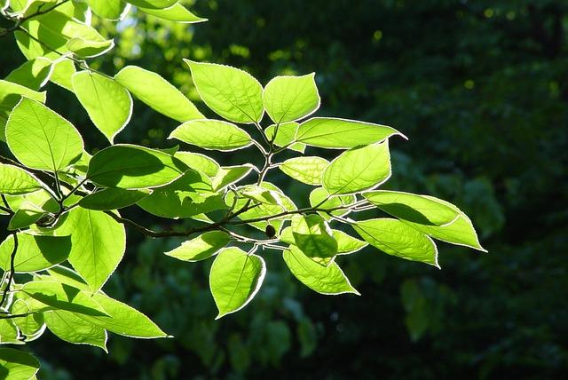 Leaves, Back Light, Tree, Beech, Ash, Sunlight, Mood
