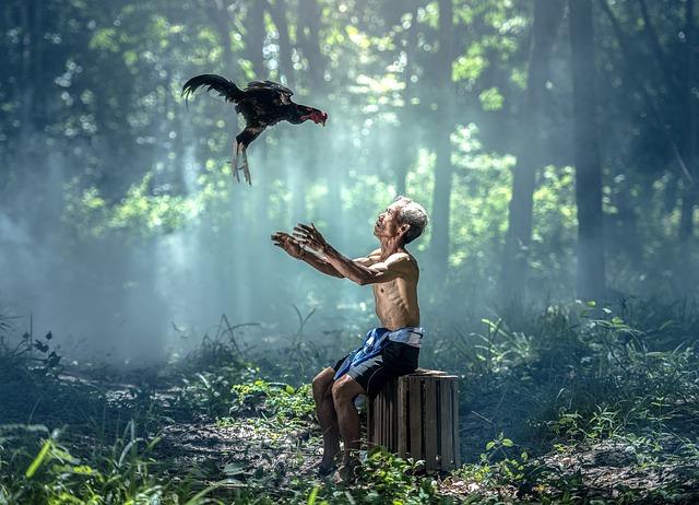 Chicken, Old Man, Birds, Wings, Animals, Asia, Bangkok