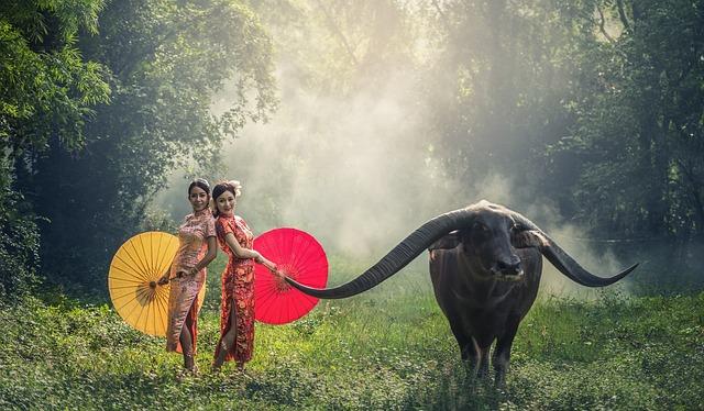 Lady, Buffalo, Young, Happy, Asia, Beauty, Cambodia