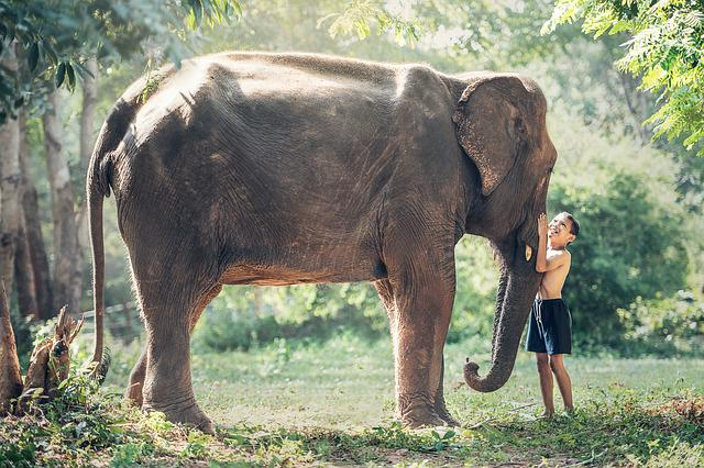 Elephant, Cambodia, Kid, Child, Animals, Asia