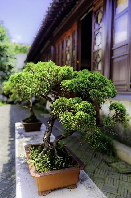 Bonsai, Tree, China, Bush, Asia, Green, Wood, Foliage