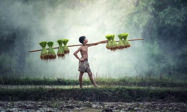 Agriculture, Asia, Cambodia, Cultivating, Farm, Farmer