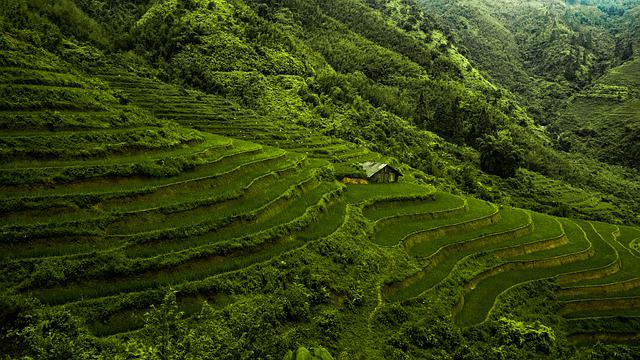 Asia, Vietnam, Rice Paddy, Rice, Green, Fields