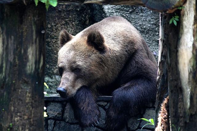 Bear, Zoo, Wildlife, Animal, Asia