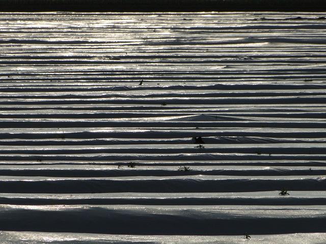 Pattern, Asparagus, Field, Landscape, Abstract, Slide