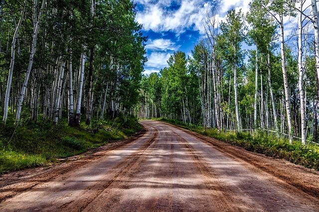 Colorado, Aspens, Landscape, Forest, Trees, Woods, Hdr