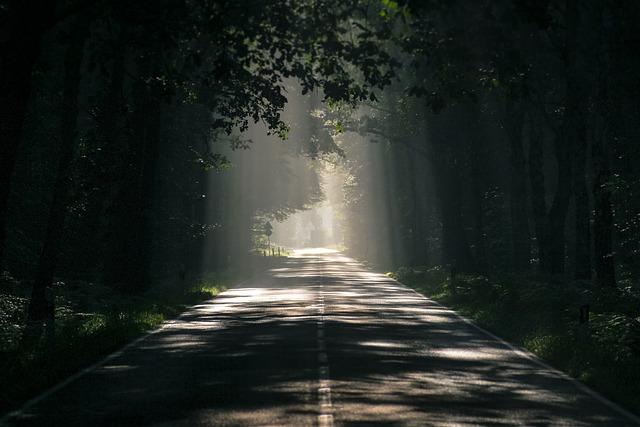 Road, Avenue, Trees, Mood, Tree Lined Avenue, Asphalt