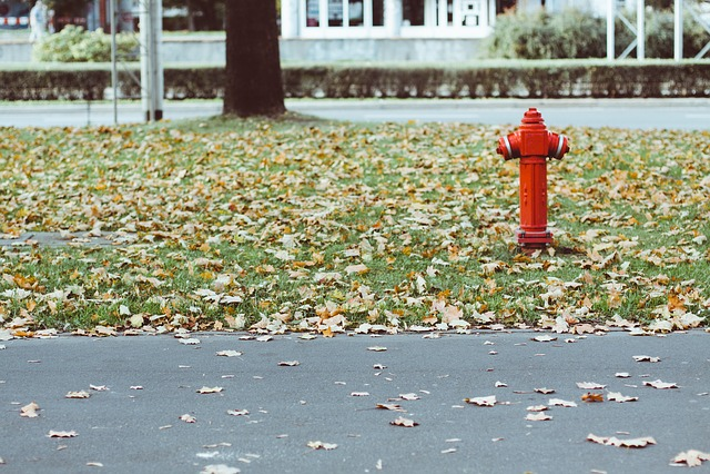 Fire Hydrant, Leaves, Grass, Asphalt, Outdoors, Fall