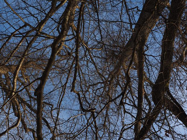 Trees, Branches, Aste, Canopy