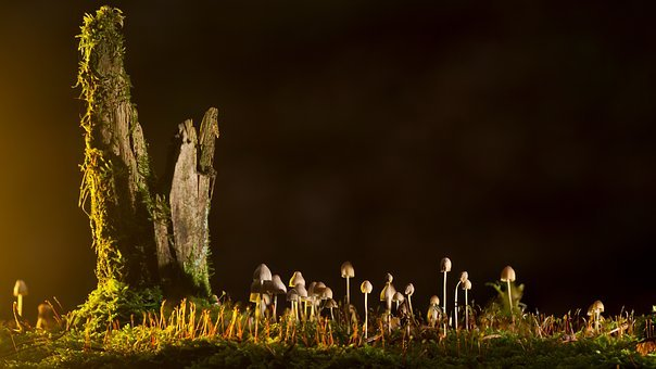 Mushrooms, Small Mushroom, Nature, At Night