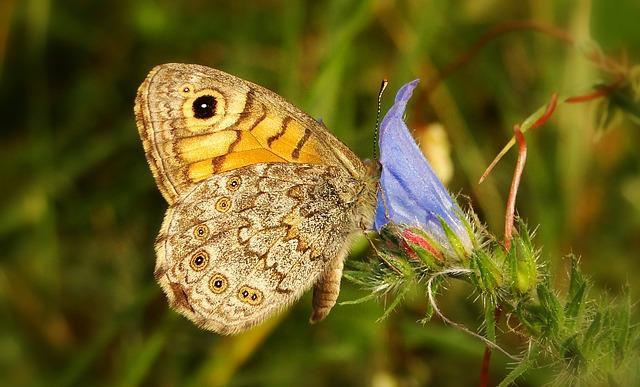Nature, Insect, Animals, Butterfly Day, At The Court Of