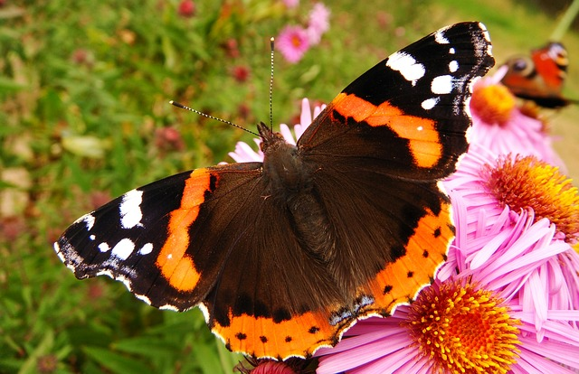 Butterfly Day, Nature, Insect, Summer, At The Court Of