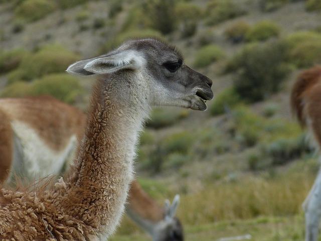 Chile, South America, Nature, Landscape, Atacama