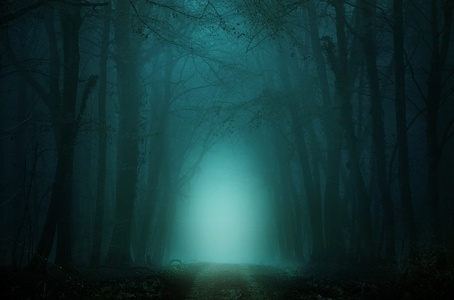Forest, Away, Fog, Trees, Atmosphere, Mysterious, Path