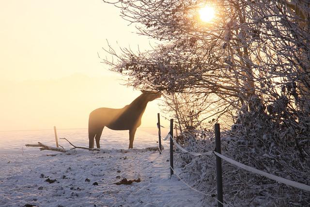 Horse, Sun, Ride, Coupling, Atmosphere, Evening