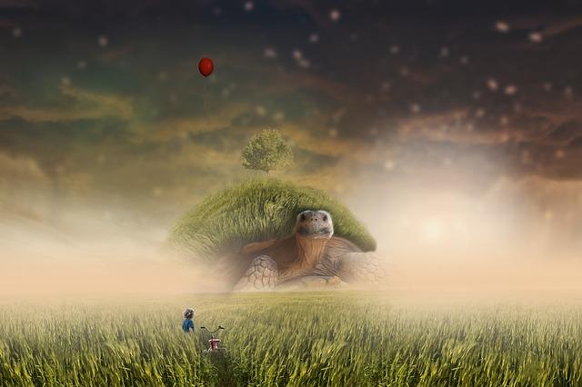 Landscape, Boy, Grass, Turtle, Atmosphere, Animal
