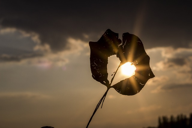 Sun, Heart, Autumn, Leaf, Beautiful, Atmospheric
