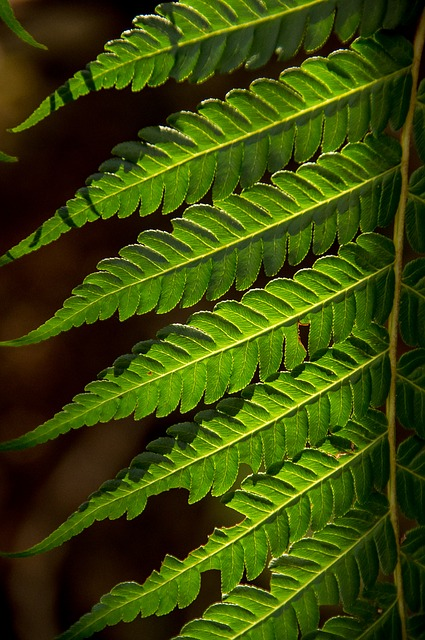 Fern, Leaf, Green, Forest, Queensland, Australia
