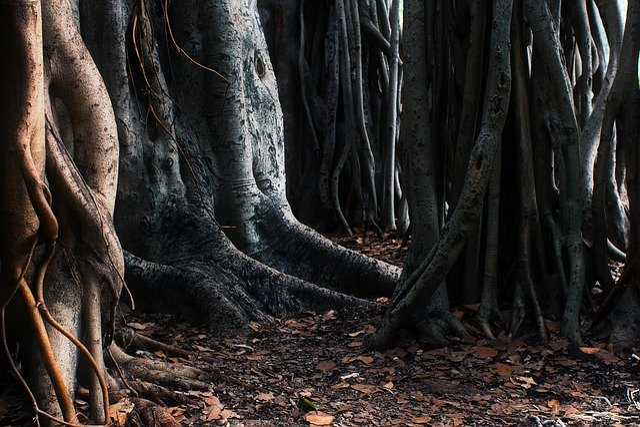 Trees, Roots, Australia, Unique, Strange, Different