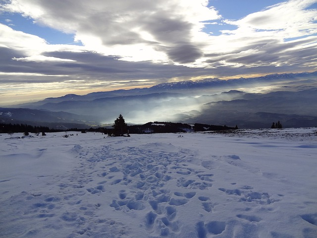 Austria, Carinthia, Lavanttal, Coral, Winter, Nature