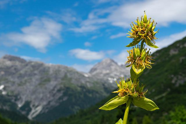 Lech, Vorarlbeg, Austria, Lech Valley, Mountain