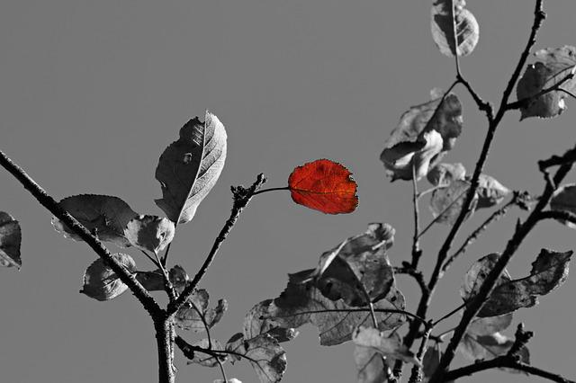 Apple Tree, Tree, Leaf, S W, Autumn, Autumn Leaf