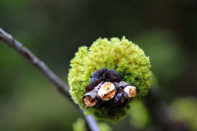Moss, Forest, Autumn, Tyrol, Austria