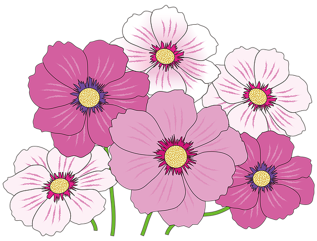 Cosmos, Autumn, Flowers, Autumn Flowers, Pink, Natural